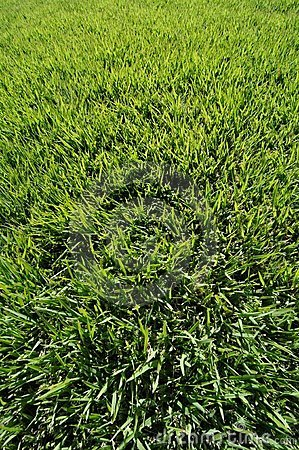 Super green turf