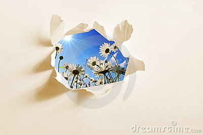 Flower behind hole in paper