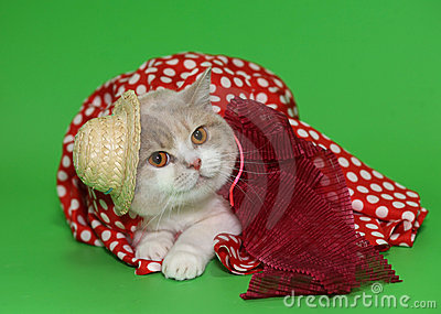 Cat in a hat and a dress.
