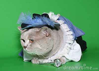 Cat in a suit of the musketeer.