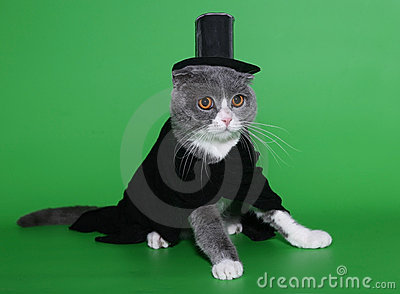 Cat in a dress coat and a hat.
