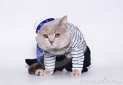 Cat in a suit of the seaman.