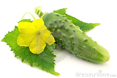 Cucumber with leaves