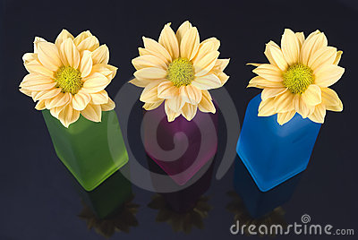 Yellow daisy flowers