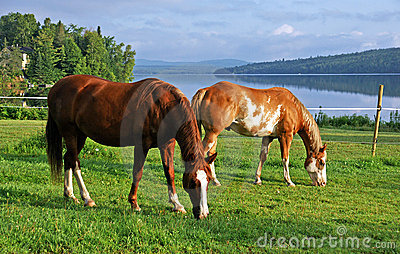 Horses grazing in a pasture by the river