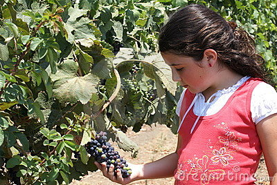 Young Girl in Vineyard