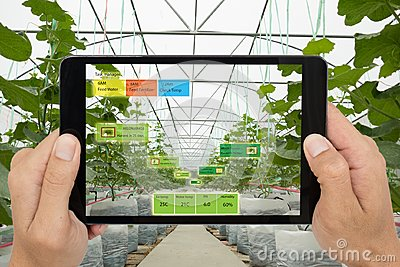 Smart agriculture concept, Agronomist or farmer use Artificial i
