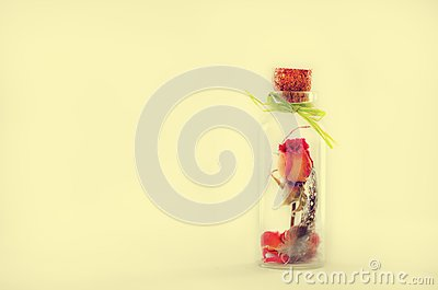 Dried flowers, plumelet, rose in aroma dropper bottle on white background, Herb-infused oil. Copyspace