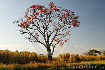Tree and red flowers