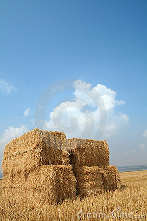 Harvest straw blue sky