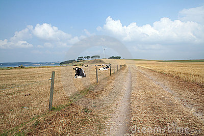 Dirt track in countryside
