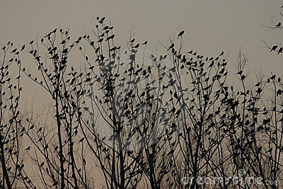Sunset of birds in a tree