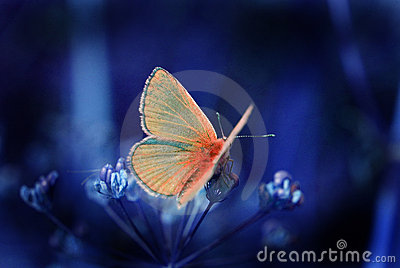 Butterfly in the night