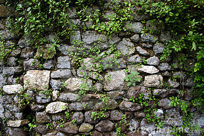 Garden Wall at Ninfa, near Rome