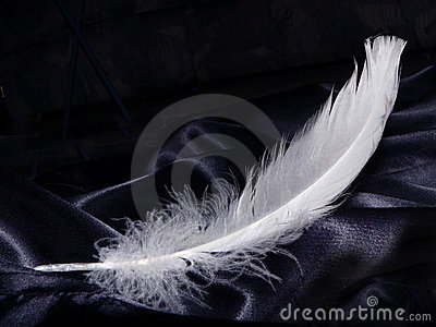 Snow White Feather