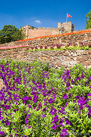 Purple flowers and castle