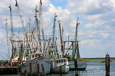 Shrimp Boats 2