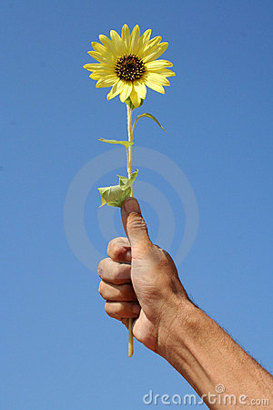 Sunflower and hand
