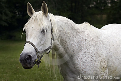 Hello There - Arabian Horse