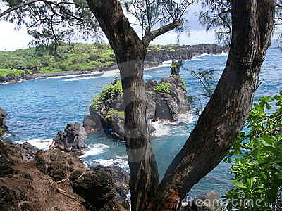 Hawaii Ocean scene through trees