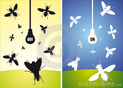 Bulb and flying flies