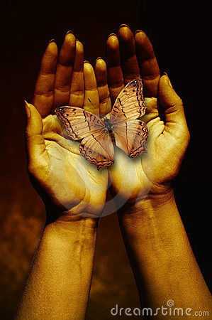 Butterfly in a woman hands