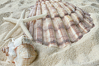 Shells and Starfish in sand