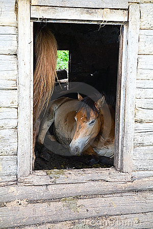 The horses in an abandoned house