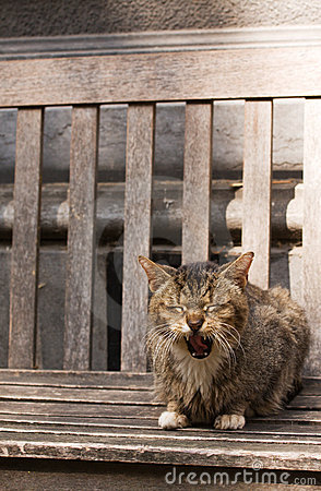 Yawning old cat sitting on bench