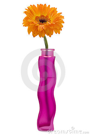 Gerbera flower in a vase
