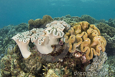 Philippine Coral Reef