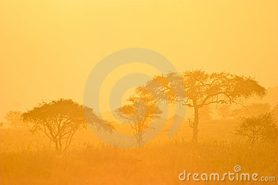 Landscape of a forest in morning mist