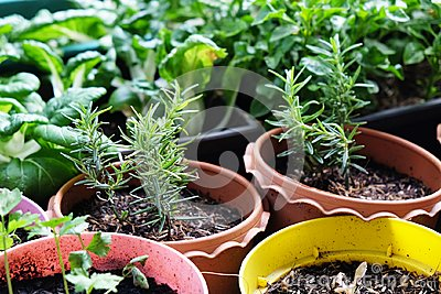 Various Organic Vegetables garden in house area