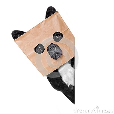 Dog with paper bag on head
