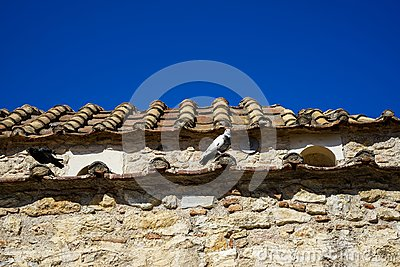 Pigeons on terracotta roof tile of old classic little church in earth tone natural stone wall with clear blue sky background