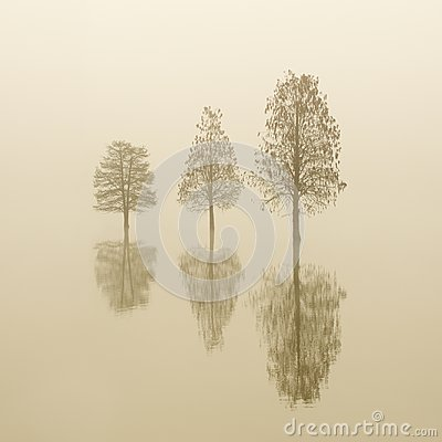Flooded three lonely trees in a fog at sunrise. smooth water.