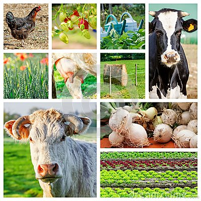 Collage representing several farm animals and farmland