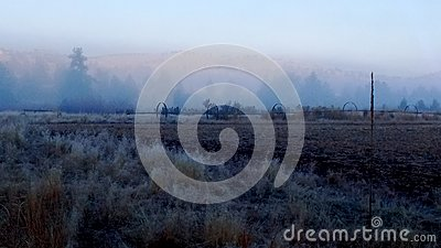 Frozen foggy desert morning