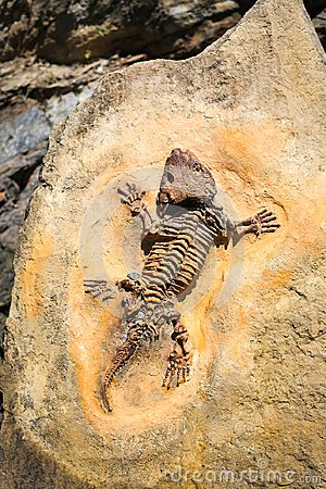 Ancient fossil imprint. Reptile skeleton on surface ground stone. Archeology and paleontology concept. Prehistoric extinct animal.