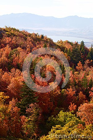 Fall Leaves in the Rocky Mountains above Provo, Utah
