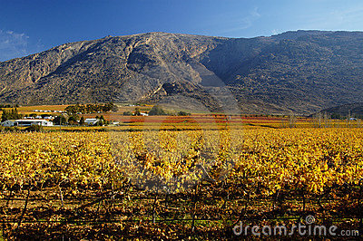 Fall Vineyards15