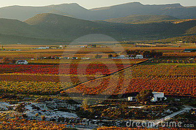 Fall Vineyards22