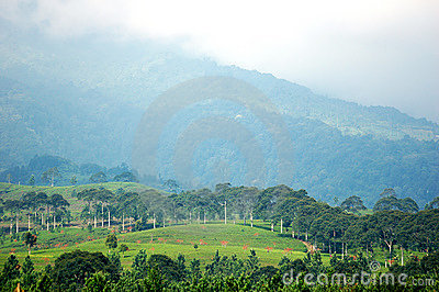 Green landscape in a foggy peak
