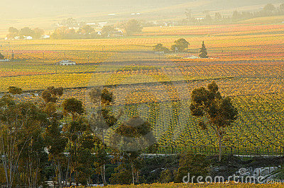 Fall Vineyards27