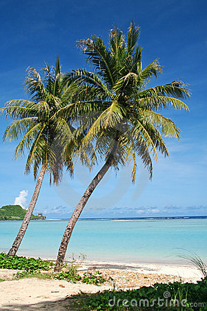 Guam tropical coconut trees