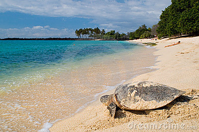 Turtle on the tropical beach