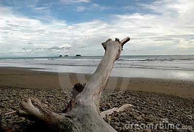 Driftwood on rocky beach