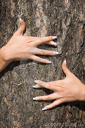 French manicure on a background of a bark-3