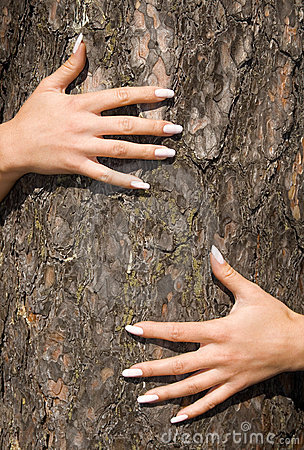 French manicure on a background of a bark-2