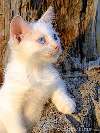 White kitten in Tree